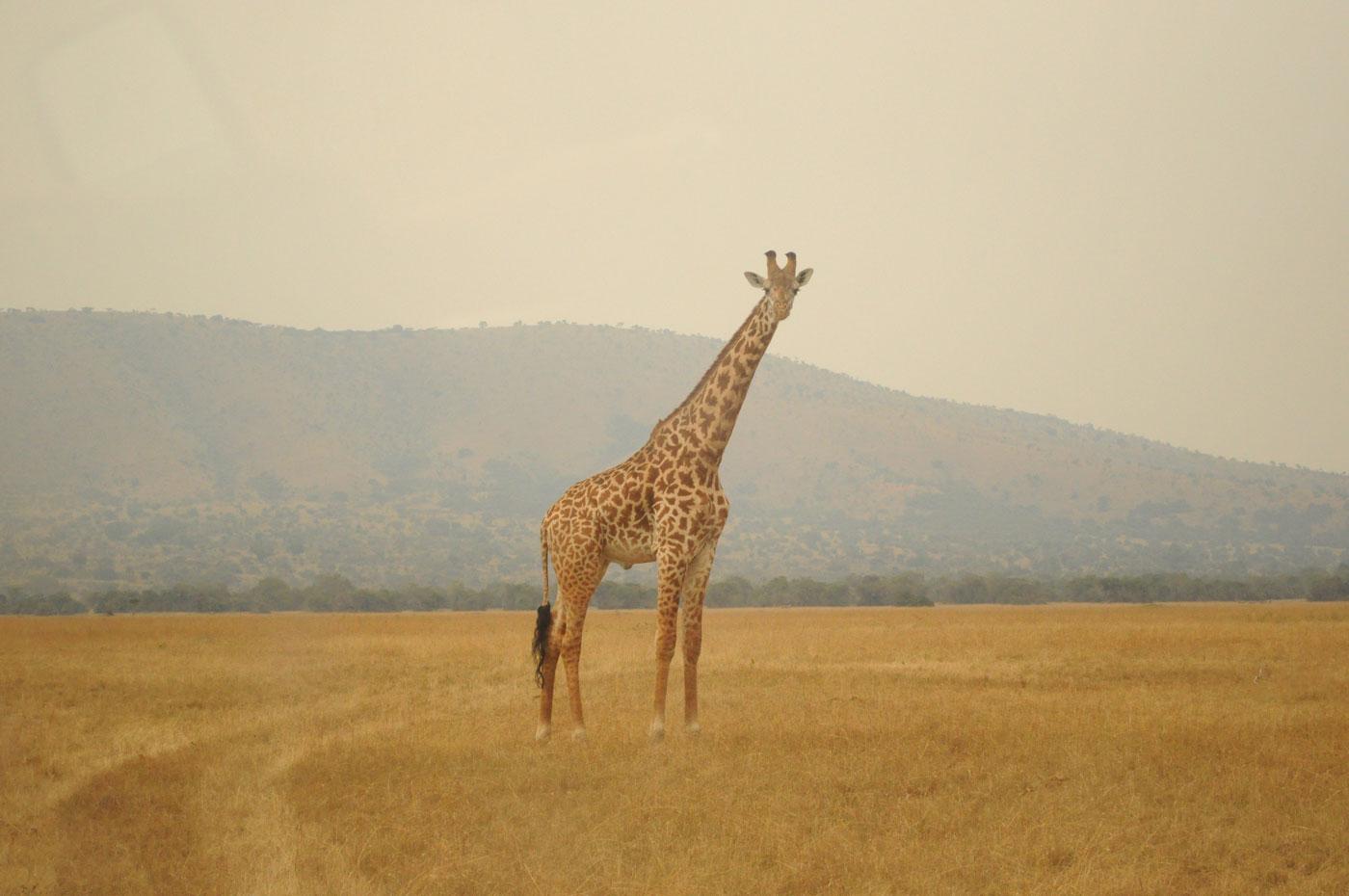 kigali-akagera-ruanda-unterwegs-reiseblog-02