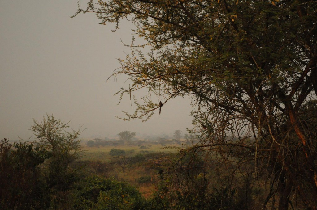 Akagera Nationalpark Ruanda
