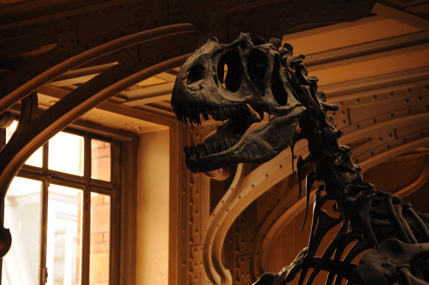 museum-histoire-naturelle-paris-unterwegs-reiseblog-02