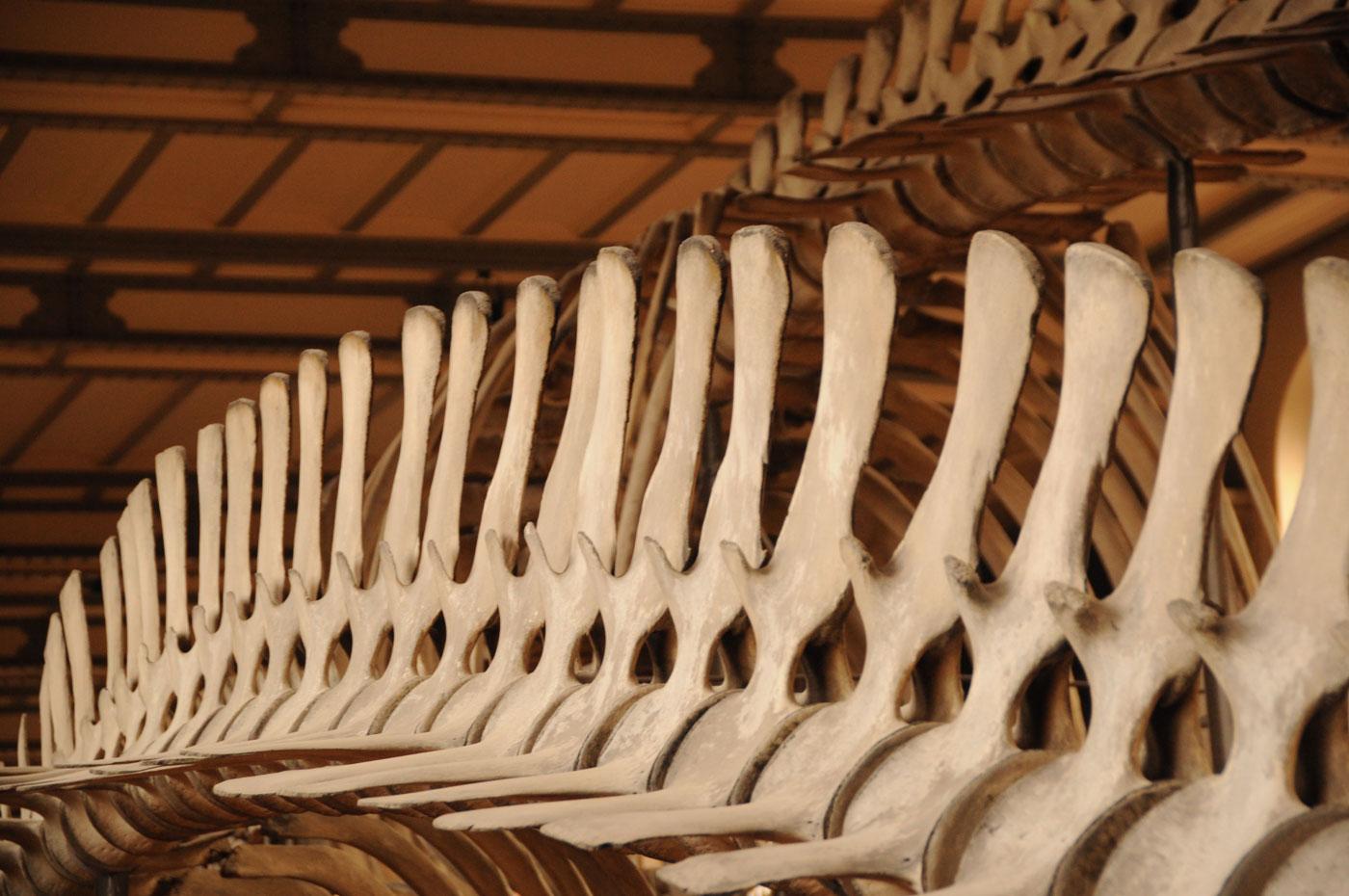 museum-histoire-naturelle-paris-unterwegs-reiseblog-03