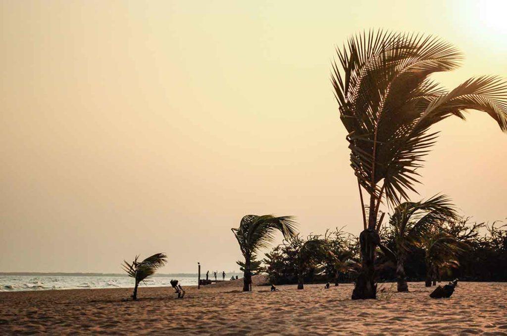 Palmen am Tanganjikasee