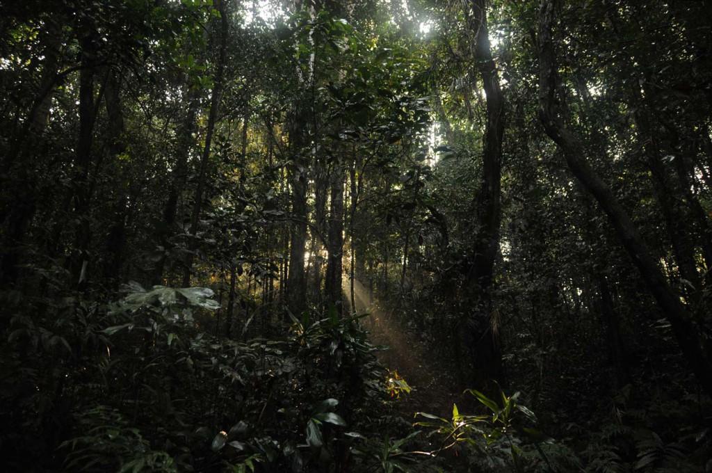 Sinharaja Regenwald Sri Lanka