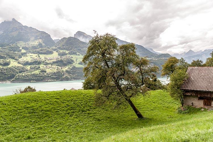 Baum am Walensee