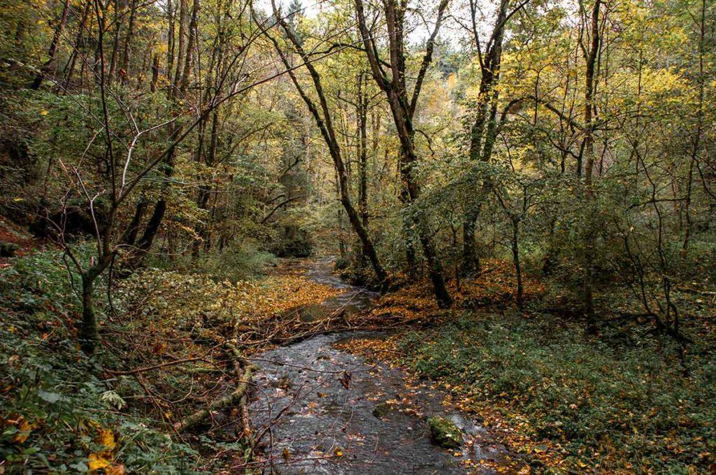 Herbst in der Gauchachschlucht