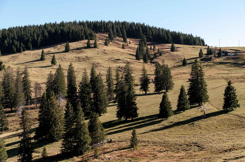 Landschaft beim Aufstieg zum Herzogenhorn