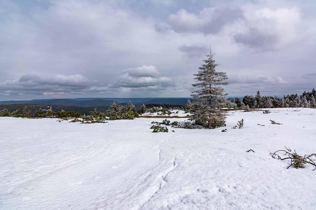 Schnee auf der Hornisgrinde
