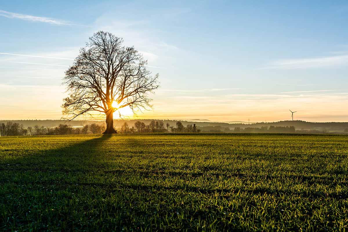 Baum beim Aussichtspunkt
